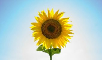 How to Make Positivity Your Superpower (Plus, Sunshine Blogger Award!)